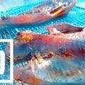 ベラも日干しにすれば旨い肴に!釣りたてベラ干物の炭火焼で一杯