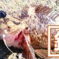 五目穴釣り!秋の千葉内房堤防で根魚メバル・ムラソイ+イシダイなど