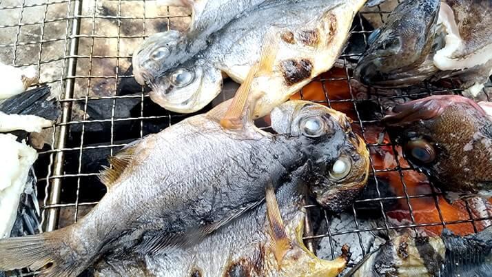 シロギスは干物にしても旨い!釣った魚を一夜干しとホイル焼きにした釣り飯