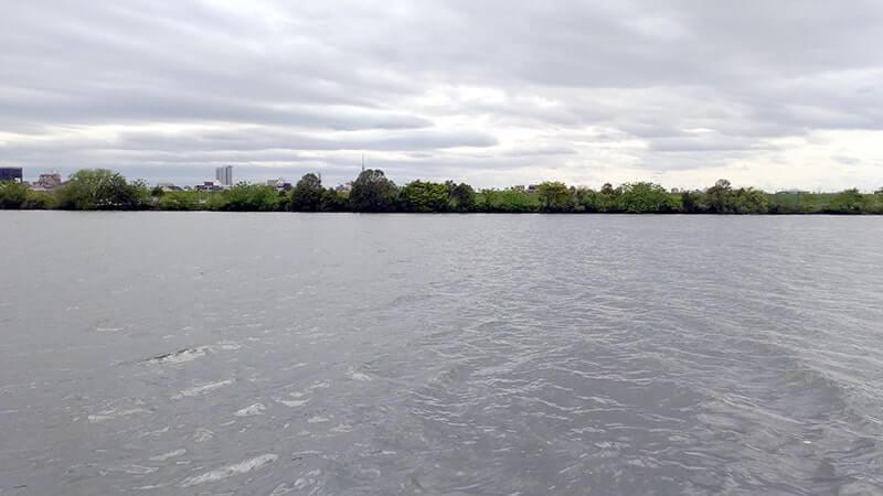 江戸川でのぶっこみ釣り!ニゴイ祭り後にアメリカナマズ…
