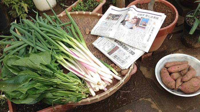 畑で新鮮野菜を収穫。土遊びを満喫した週末。