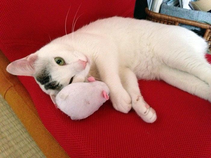 猫のかわいい行動30選!面白かわいいヅラ猫画像