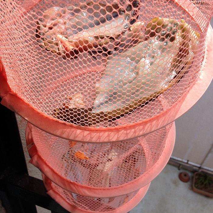 初心者でも安心の堤防五目釣り!釣った魚は干物にして食す