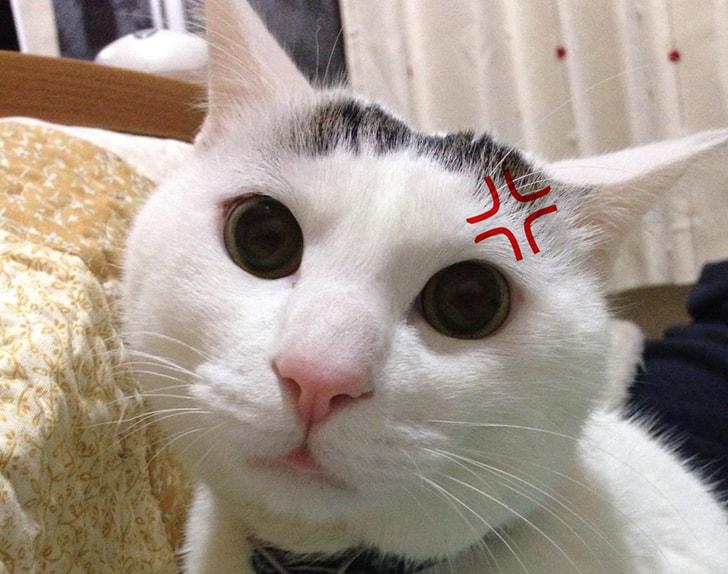 「あの人苦手。生理的に無理。」それは猫にだってあるのだ