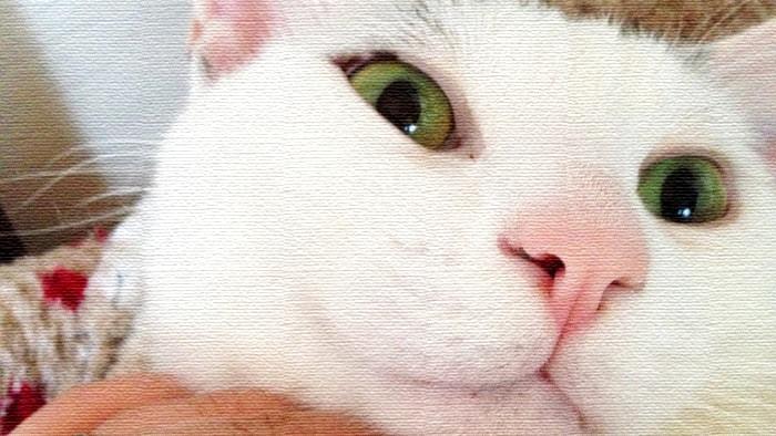 【面白かわいい】ヅラねこ大五郎ブログのおすすめ記事