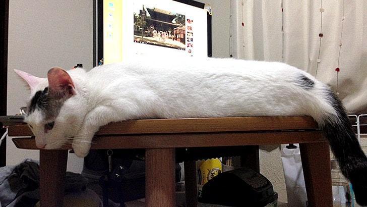猫が喜ぶ猫用テントをハンガーとTシャツで作ってみた♪