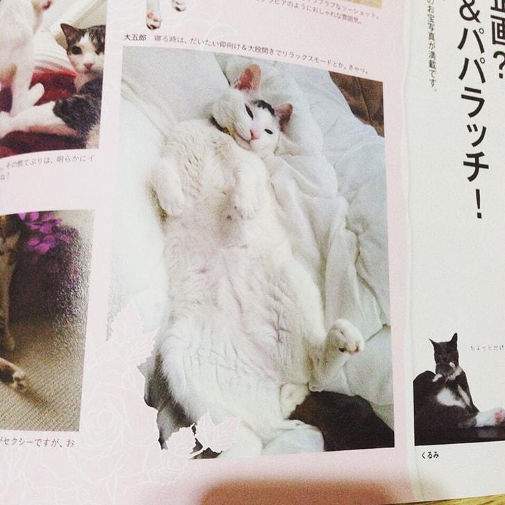 雑誌anan(アンアン)に我が家のヅラねこ大五郎の写真が掲載されました!