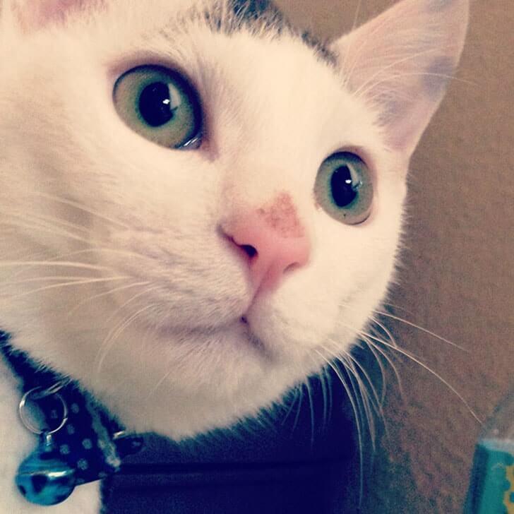 我が家のヅラ猫『大五郎』の近況+ブログをはてなに移行しました