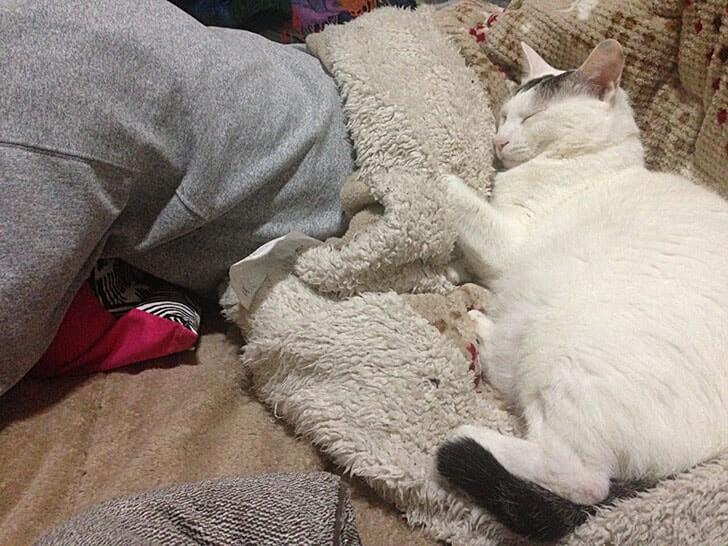 大五郎(猫)は主人である僕を枕だと思っているようだ