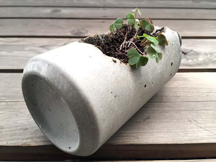 【セメントワーク】雑草用のプランターや葉っぱ的なものを作っています