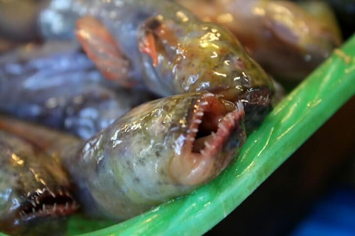 「有明海のエイリアン」の出汁が入ったエイリアンラーメンを食べたよ