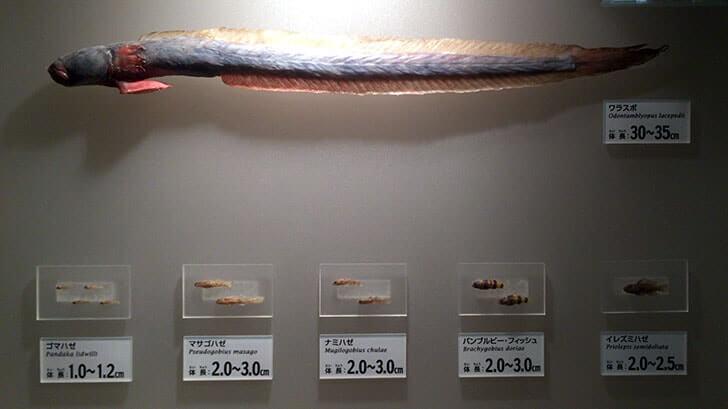 上野『国立科学博物館』シロナガスクジラの大模型が目印