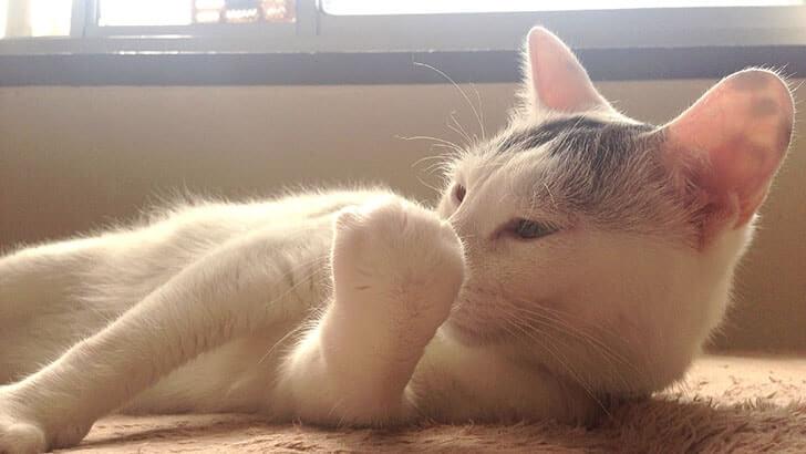 いい匂いがする猫の5つの部分 今は猫びいきでございます