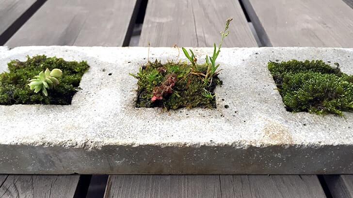 「雑草という名前の草はない」 セメントプランターに植えた道端の植物
