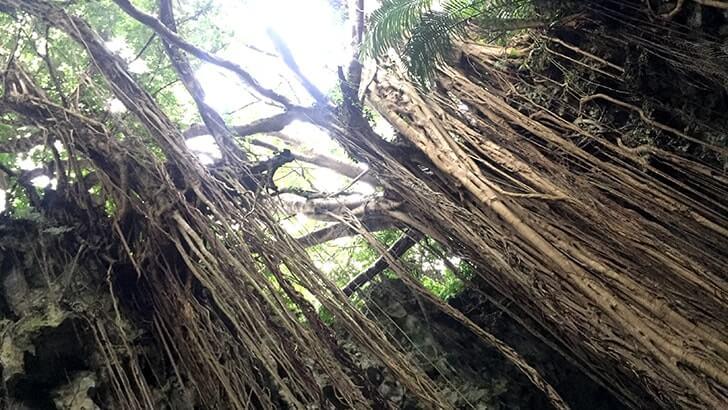 ガンガラーの谷-元鍾乳洞の森を巡るパワースポットツアー【沖縄旅行】
