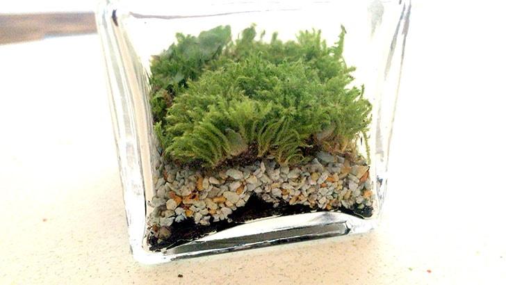 瓶の中の小さな世界!かわいくおしゃれな苔テラリウムの作り方